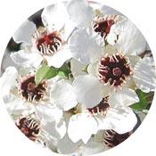 Botanical Jewellery